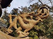китайский дракон Стоковое Изображение