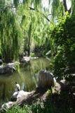 Китайский сад приятельства Стоковая Фотография