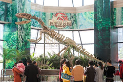 Китайский скелет динозавра на дисплее Стоковое Изображение