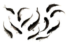 Китайский традиционный выдающийся шикарный декоративный покрашенный вручную чернил-карп стоковое изображение