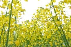 Китайский фестиваль весны цветки на открытом воздухе стоковое изображение rf