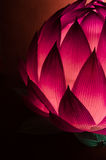 Китайский фонарик лотоса для среднего празднества осени Стоковое Изображение RF