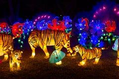 Китайский фонарик тигра Нового Года фестиваля фонарика Стоковые Фотографии RF