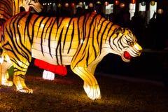 Китайский фонарик тигра Нового Года фестиваля фонарика Стоковое фото RF