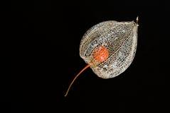 китайский фонарик цветка Стоковые Изображения