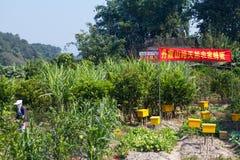 Китайский хранитель пчелы стоковые фотографии rf