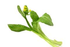 китайский kale Стоковые Фото