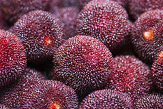 Китайский waxberry Стоковое Изображение