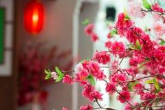 Китайское цветение сливы Стоковое Изображение