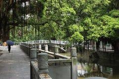 Китай: оно ` s джунгли стоковая фотография