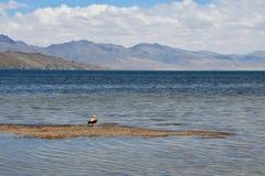 Китай, Тибет, священное озеро для буддистов Manasarovar стоковое изображение rf