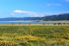 Китай Sinkiang, озеро Sailimu Стоковая Фотография