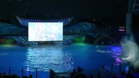 Киты брызгая с их кабелем, к публике в торжестве Shamu освещают вверх ночь на Seaworld