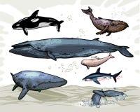 киты Стоковая Фотография RF