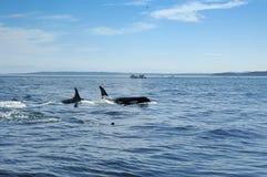 киты Стоковое фото RF