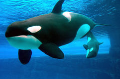 киты Стоковые Изображения