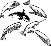 кит группы Стоковое Фото