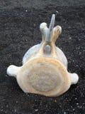 кит косточки Стоковые Изображения