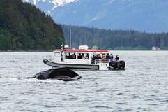 Кит наблюдая, горбатые киты в Аляске Стоковые Фото