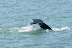 кит подныривания Стоковые Фотографии RF