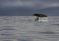 кит сказа Стоковая Фотография