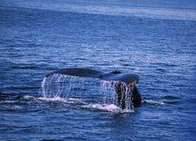 кит сказа Стоковое Изображение