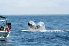 кит суживающаяся хвостовая часть лодки Стоковые Фотографии RF