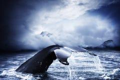 кит Стоковая Фотография RF