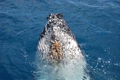 кит стоковые изображения rf