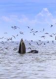 кит bryde s Стоковое фото RF
