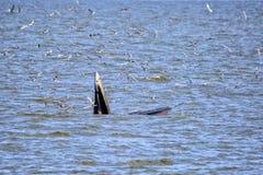 кит bryde s Стоковые Фото