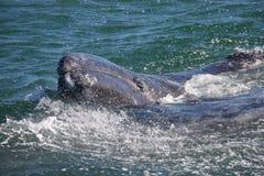 кит gary младенца Стоковые Фото
