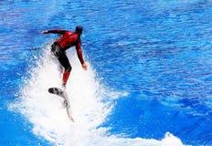 кит riding Стоковое Фото