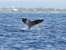 кит waikiki humpback Стоковая Фотография