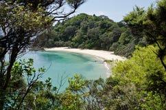 кит zealand пляжа новый Стоковое Изображение