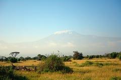 Килиманджаро, национальный парк Amboseli, Кения Стоковые Изображения RF