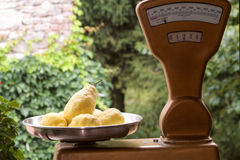 2 килограмма лимонов Амальфи в старом балансе Стоковая Фотография