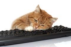 клавиатура кота кладет красный цвет Стоковое фото RF