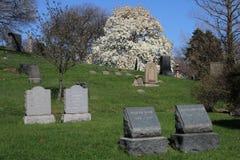 Кладбище древесной зелени в Бруклине, NY Стоковое фото RF