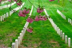 кладбище arlington Стоковые Изображения