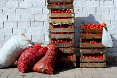 кладет томаты в коробку Стоковые Изображения