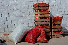 кладет томаты в коробку Стоковое Изображение
