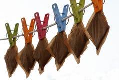 кладет чай в мешки Стоковая Фотография