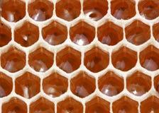 кладовка нектара меда Стоковые Изображения