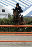 классицистическая выставка лошади hampton Стоковое Фото