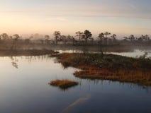 классическое предыдущее утро болотоа ландшафта Стоковые Фотографии RF