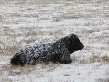Класть кормила предусматриванный в снеге Стоковое Изображение RF