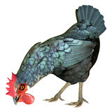 клевать цыпленка Стоковые Фото