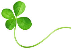 Клевер 4 листьев Стоковая Фотография