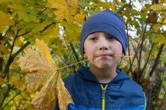 Кленовые листы в зубах Стоковые Изображения